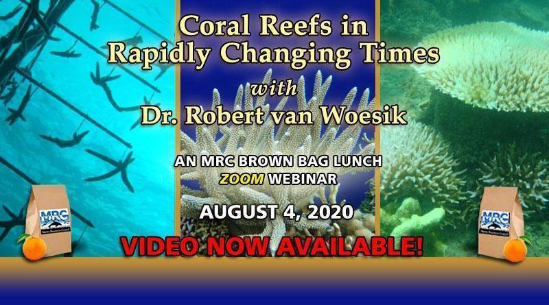 Coral Reefs: August 2020 Lunch & Learn Webinar