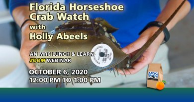 Oct. 2020 Webinar: Florida Horseshoe Crab Watch