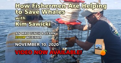 Nov. 10 Webinar: Fishermen Helping to Save Whales