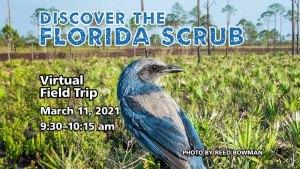Discover the Florida Scrub
