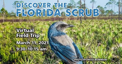 Discover the Florida Scrub