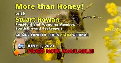 More than Honey!