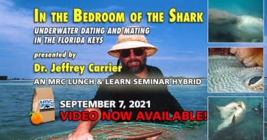In the Bedroom of the Shark: Underwater Dating and Mating in the Florida Keys