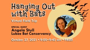 Hanging Out with Bats!
