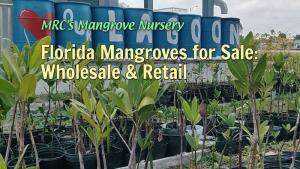 MRC's Mangrove Nursery