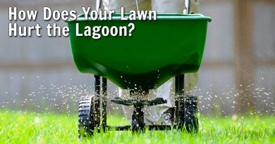 How Does Your Lawn Hurt the Lagoon?