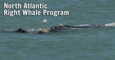 North Atlantic Right Whale Program