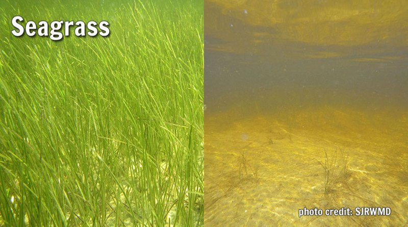 Seagrass: Healthy and Poor