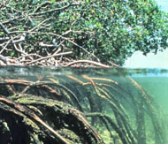 tips-create-habitat