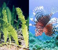 tips-dont-dump-your-aquarium