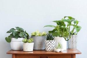 Kamerplanten in leven houden, ook jij kan het