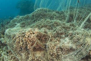 Destructive fishing threatens Philippine coral reefs, says ...