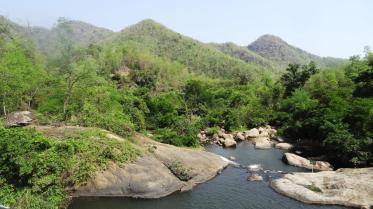 Eastern-Ghats-King-Cobra-Habitat-7