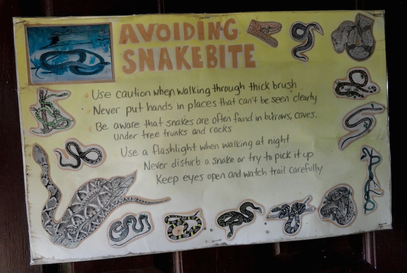 avoid-snakebite-belize-550