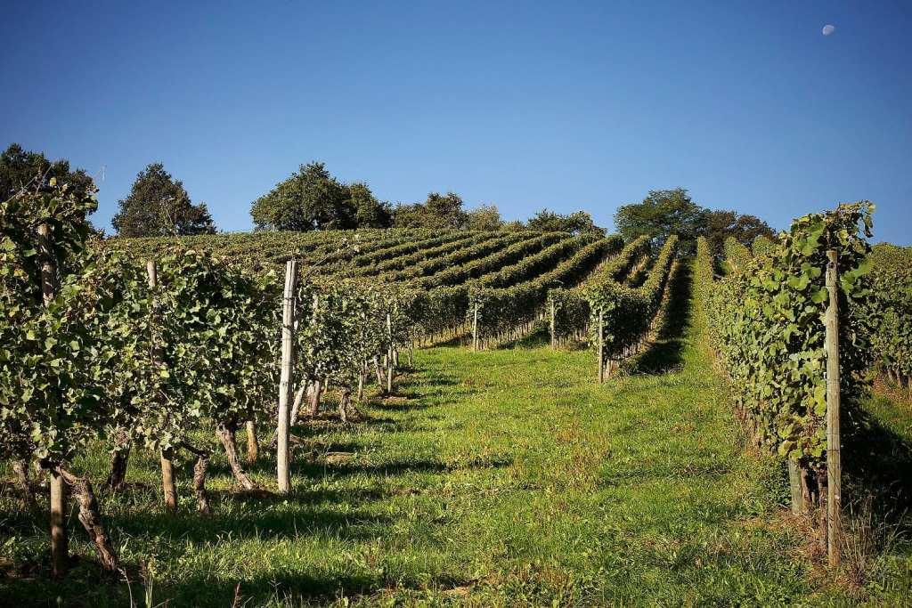 Le caviste / Carnets de voyage - Balade dans le vignoble, partie 2