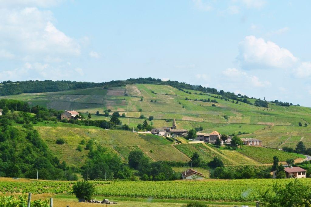 Le caviste / Carnets de voyage - Balade dans le vignoble, partie 3 et fin