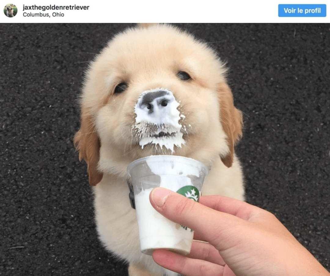 puppuccino starbucks