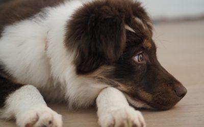 Adoptez, réfléchissez,  pourquoi un chien ?
