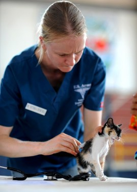 kitten-569956_640