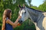 horse-2340369_640