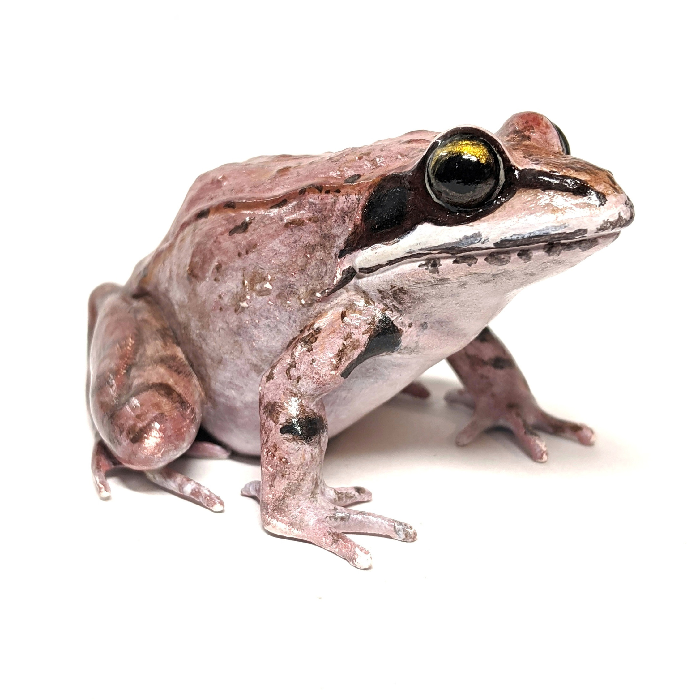 Wood Frog (Lithobates Sylvaticus) Model