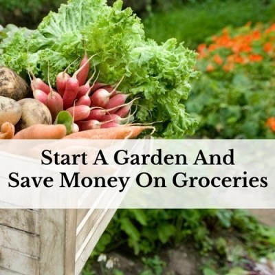 Start A Garden And Save Money On Groceries