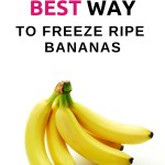 Do not let your ripe bananas go to waste. Discover the best ways to use ripe bananas. You will find 7+ frugal and common uses for bananas right here.