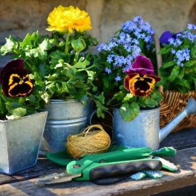 21 Best Gardening Accessories