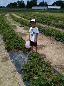 Brady Strawberries