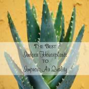 Make your decorating functional! Here are the best indoor houseplants to improve air quality while proving a wonderful aesthetic to your home.