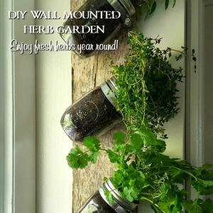 How to Make an Indoor Wall Mounted Herb Garden to Enjoy Fresh Herbs Year Round