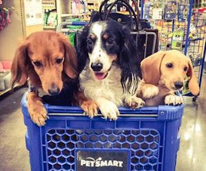 *HURRY* PetSmart – $7 Off Coupon = Free Item!