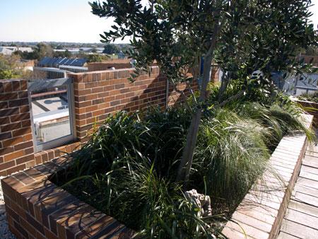 roof garden trees Rainwater tanks   SAVING OUR TREES - Marrickville municipality