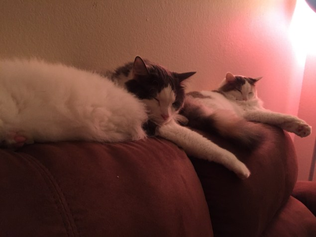 Tubby and Frou snuggling and napping
