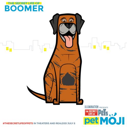 share-Boomer