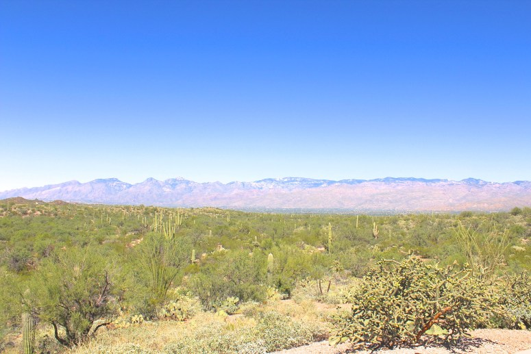 Scenic Drive through Saguaro National Park East