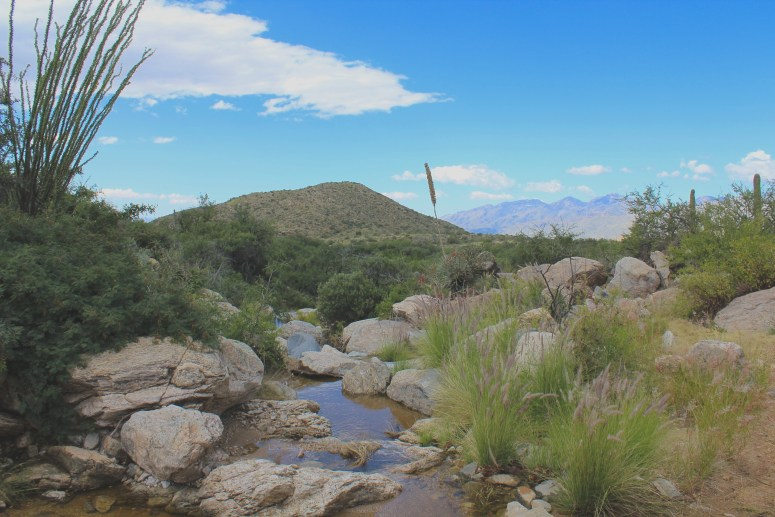 Hiking to Bridal Wreath Falls in Saguaro National Park