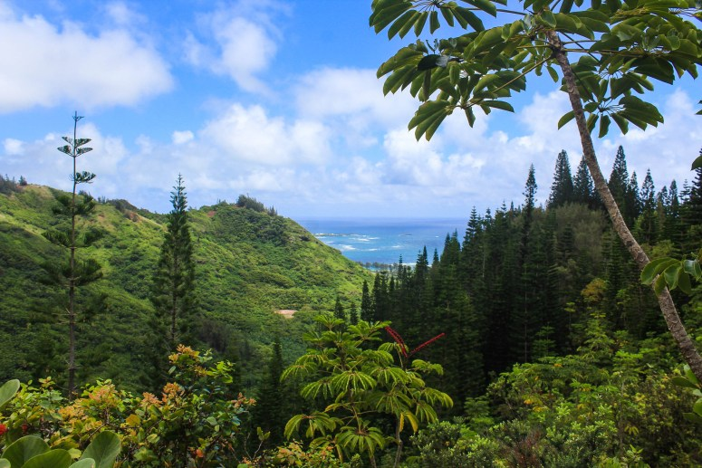 trail guide hiking hau'ula loop trail hau'ula hawaii beautiful less popular windward oahu hike