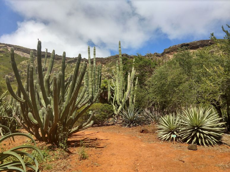 Cactus plants in Koko Crater Botanical Garden