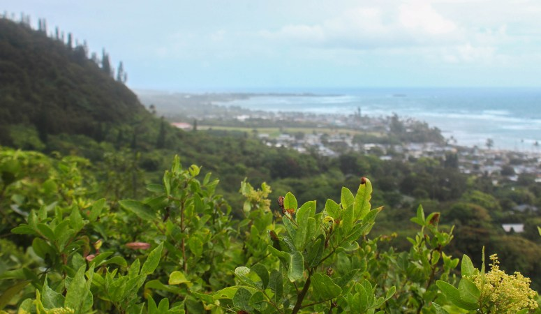 Ma'akua Ridge Loop Trail