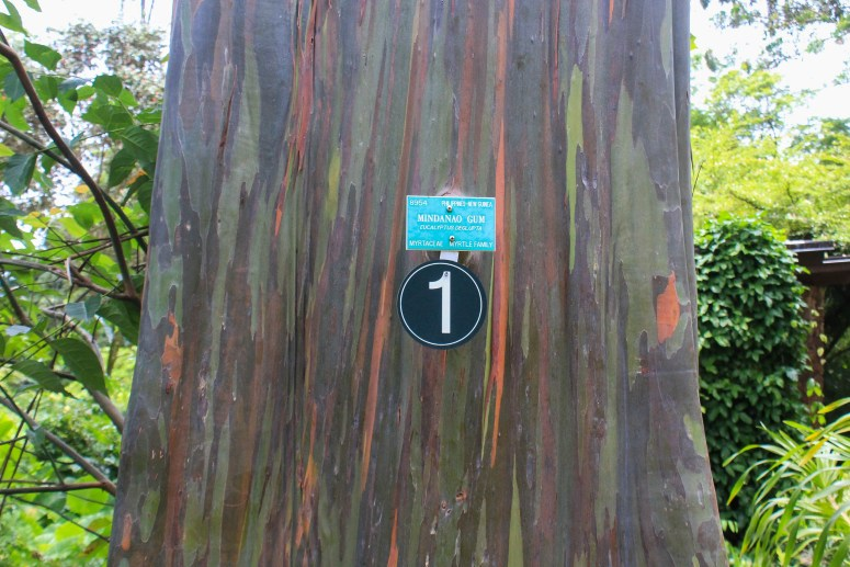 wahiawa botanical garden rainbow gum tree free oahu hawaii attraction