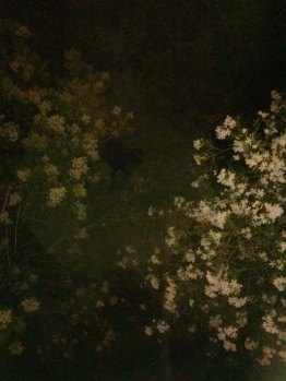 trees and flowers at carrie's at night4