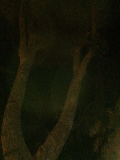 Trees at Carries at night1