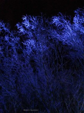 blue-trees-at-night-at-yerba-buena-center-for-the-arts-copy