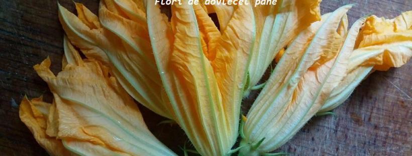 Flori de dovlecel pane
