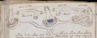 Voynich, f 77v