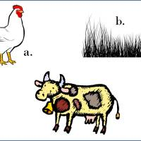 East or West? A cultural chicken test.