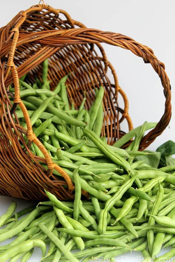 Fresh picked green beans