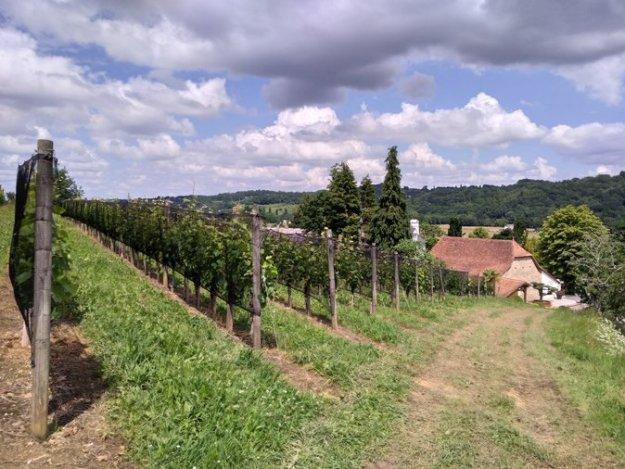 Domaine Cauhapé in the Juraçon