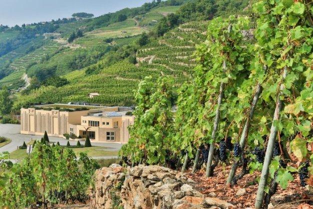 northern Rhone Valley vineyards
